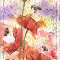 Bees, Poppies and Poppy-Bee (Osmia papaveris) Watercolour and Ink-Pen 20 x 28 cm