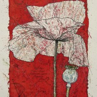 Poppy in Red