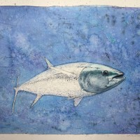 Tuna (bluefin)